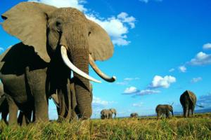 大象的鼻子像什么