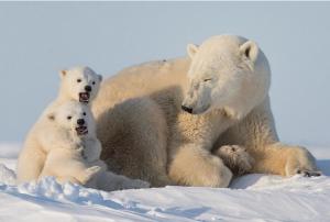北极熊的皮肤是什么颜色